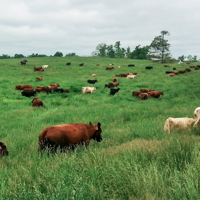 Pasture Plan for 2018?