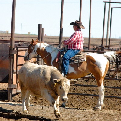 SHORTY HUTSON RIDING PENS 47 YEARS