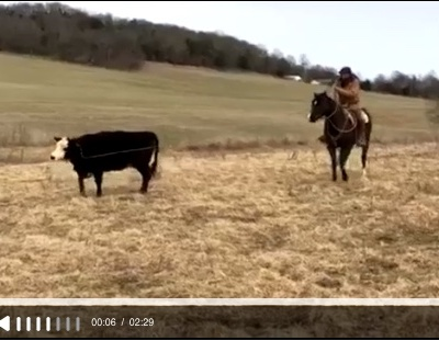 roping cow