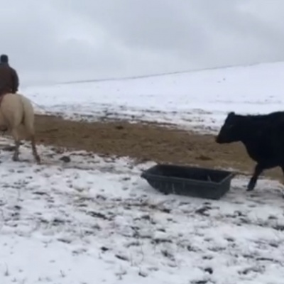 Good cow, good cowboys – by Dawn Martin