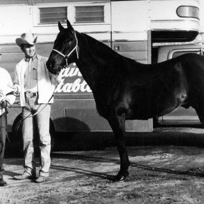 "Bloodlines: King Fritz and the ""Chex"" Horses"