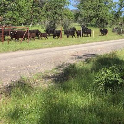 Movin' the Herd Along – by David Bem