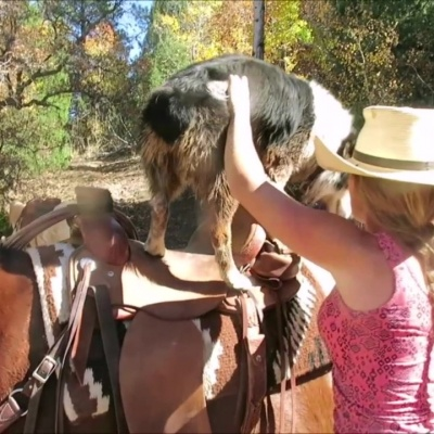 Saddle Up Pup – by Alicia Hatch
