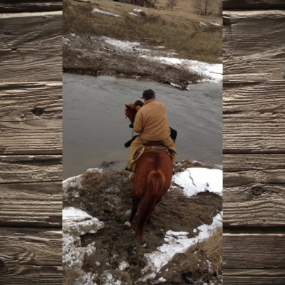 A Good Horse and a Lucky Calf – by Tanya Skager