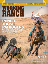 Working Ranch November December 2018